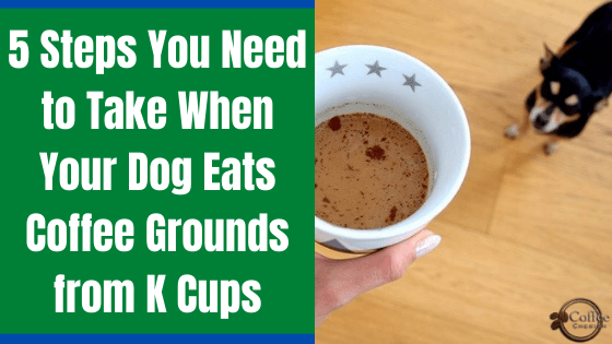 dog eats coffee grounds k cups